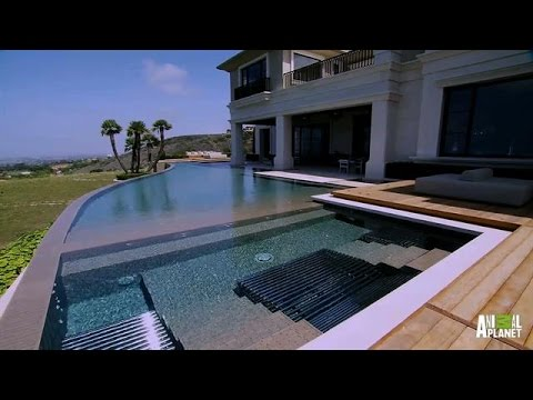 A Million Dollar Aquatic Masterpiece | The Pool Master - Animal Planet  - 5ThHjtrjOSg -
