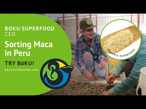 CEO of BōKU Superfood Sorting Maca in Peru with the Maca Farmers!