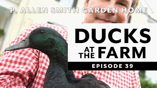 Ducks Breeds at Moss Mountain Farm | P. Allen Smith (2020)