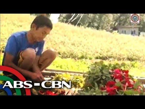 TV Patrol Central Visayas: rosas nga maoy labing hinalitan nahurot na sa pagharvest