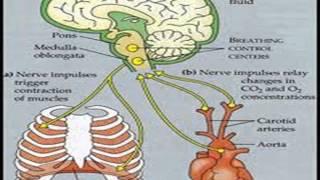 Control del centro respiratorio
