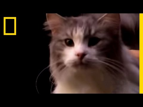 Cat Diversity | National Geographic