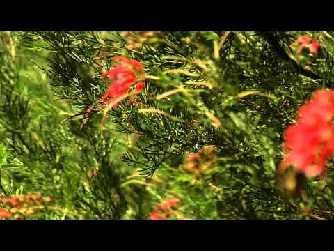 Discover Davis - UC Davis Arboretum (Summer)