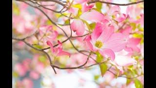 Piano: Kumiko Fujiwara Solo: Julie Weigand Japanese Women´s Choir N...