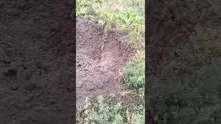 видео Вінниччина відправила допомогу до Ічні
