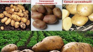 Самый ранний урожайный картофель(, 2017-03-26T20:24:45.000Z)