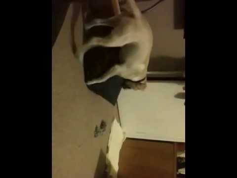 Humping the pillow turns