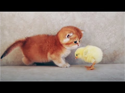 🥰 Cute is Not Enough 🥰 Cute and Funny Kittens [Funny Pets]