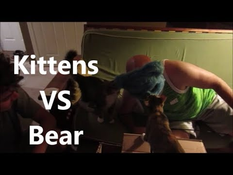 Kittens VS Bears 9.14.18 day 1906