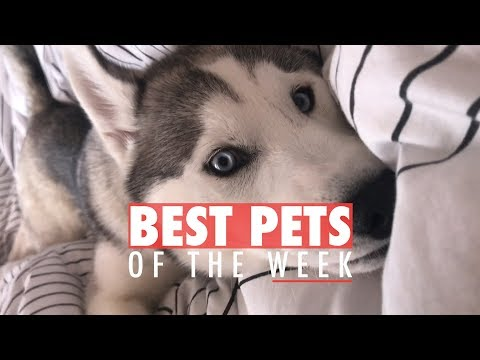 Best Pets of the Week | October 2017 Week 2