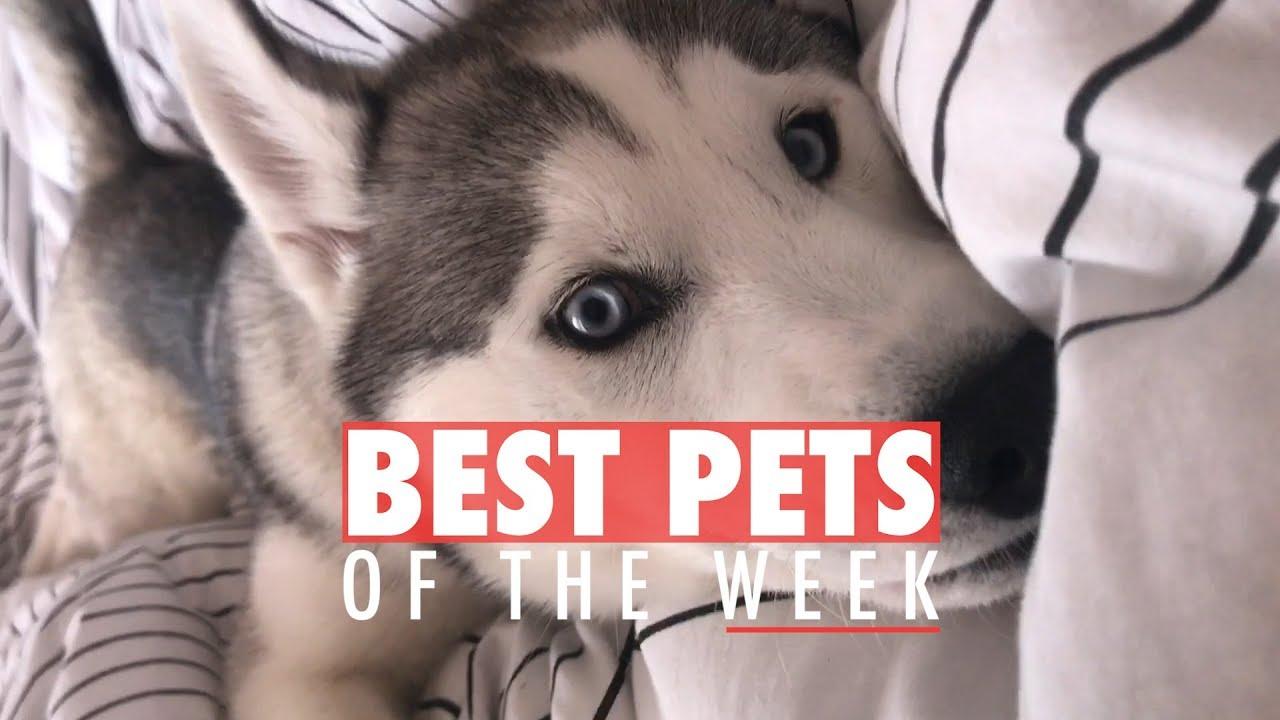 Best Pets of the Week | October 2017 Week 2