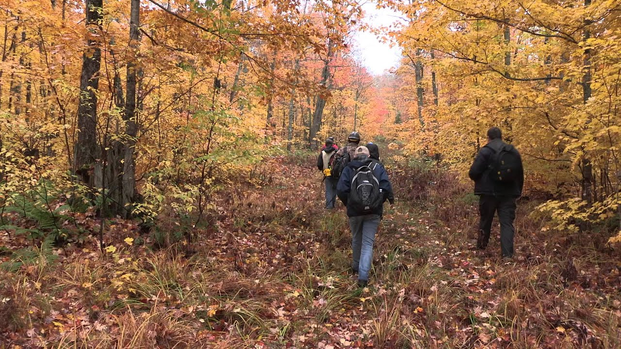 Preview image for Michigan Tech lands designated as Model Forest video