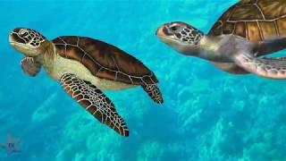 видео Соленость воды на поверхности мирового океана