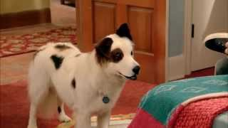 Dog With A Blog - Spying On Karl