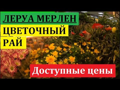 ЛЕРУА МЕРЛЕН. ЖЕНСКОЕ