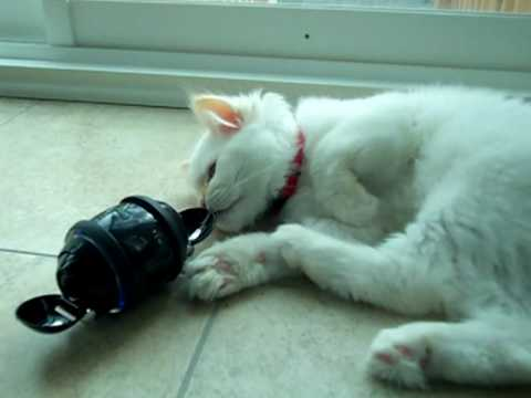 Bello the cat meets Sony Rolly!