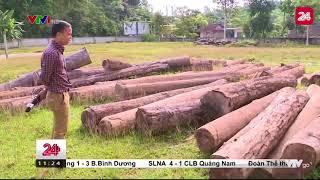 Tiêu điểm: Tan hoang rừng tự nhiên Quỳ Hợp - Tin Tức VTV24