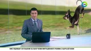 Самый быстрый в мире пес живет в Калифорнии