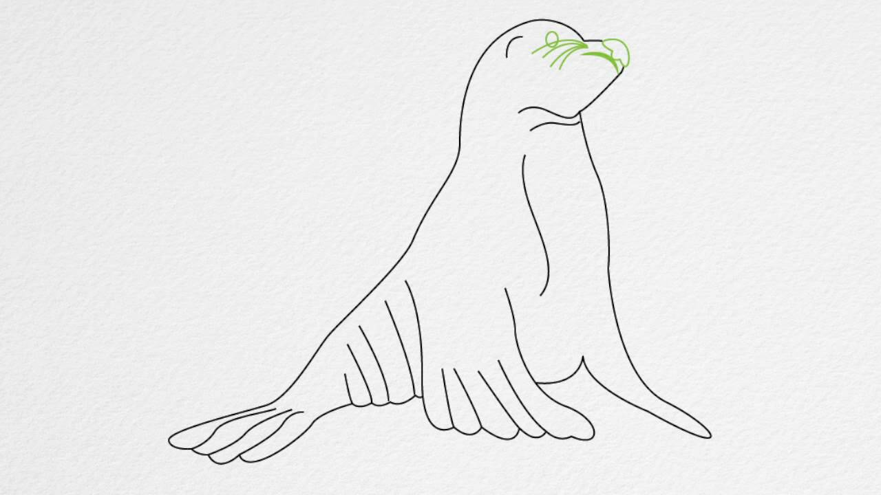 Uncategorized How To Draw A Seal Step By Step how to draw a seal step by youtube