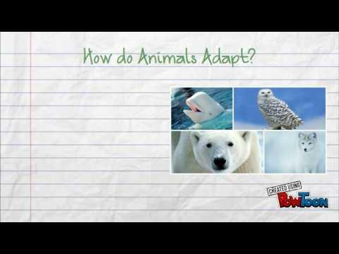Tundra - Plant and Animal Adaptations - YouTube