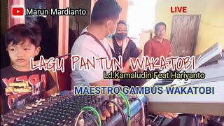 MAESTRO GAMBUS WAKATOBI part 1    LIVE PANTUN WAKATOBI    MARUN MARDIANTO