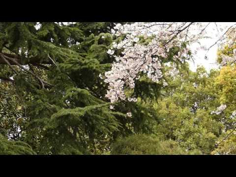 [HS] Spring in Tokyo 2016