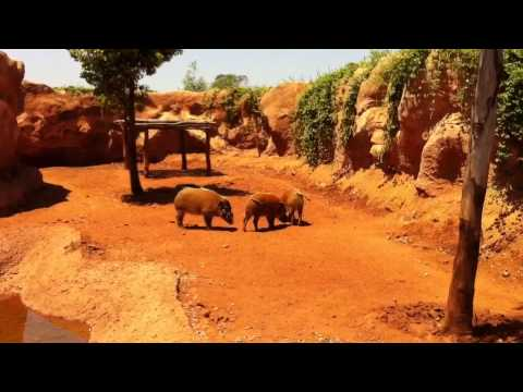 ZOO In MOROCCO