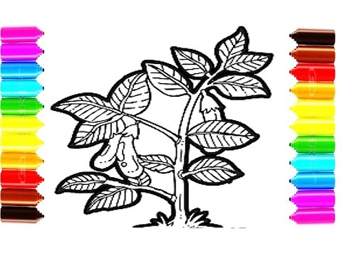 How To Draw And Color Eggplant Tree Coloring Pages For Children