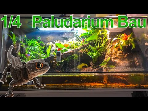 paludarium regenwald terrarium dendrobaten doovi. Black Bedroom Furniture Sets. Home Design Ideas