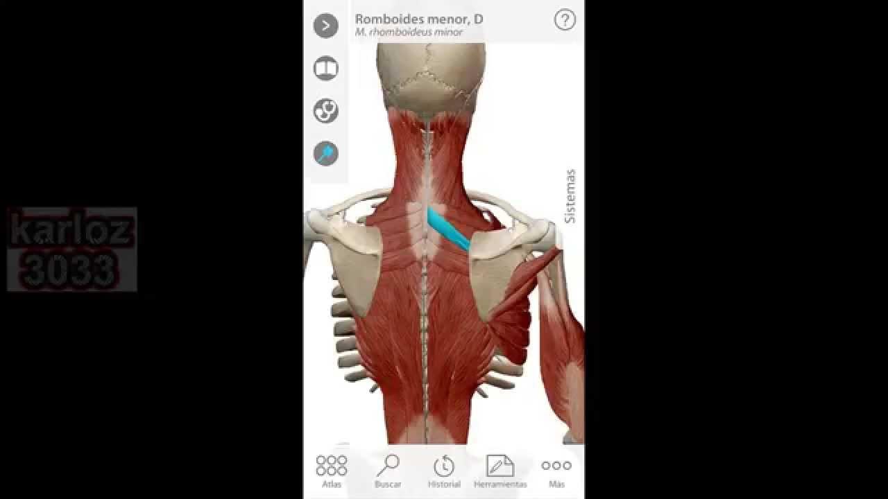 Omóplato u Escápula-Anatomía Humana - YouTube