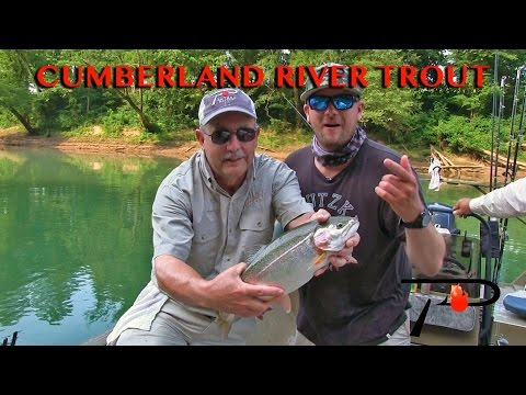 Kentucky's Cumberland River Trout Fishing