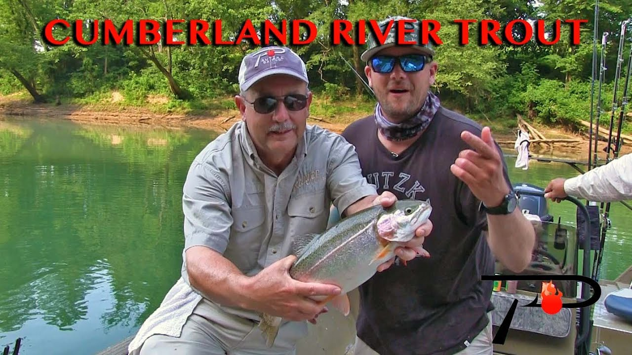 Kentucky 39 S Cumberland River Trout Fishing Youtube