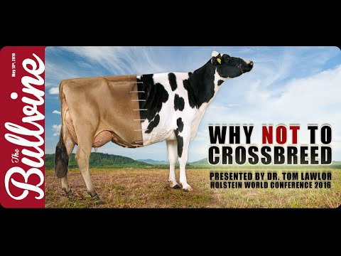Why NOT to Crossbreed – 2016 Holstein World Conference Video