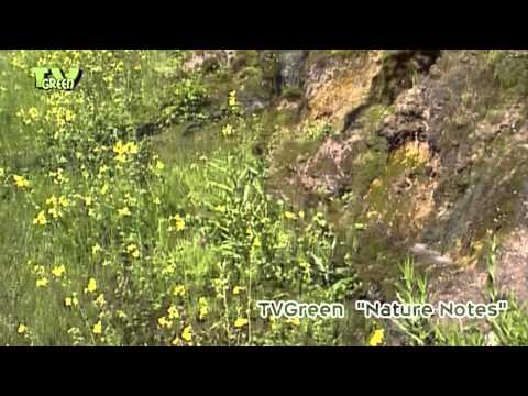 Yellowstone National Park #04 flora & fauna