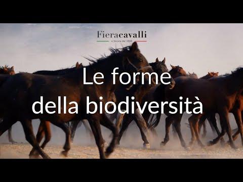 """IL VIAGGIO CHE CAMBIA - """"Le forme della biodiversità"""""""