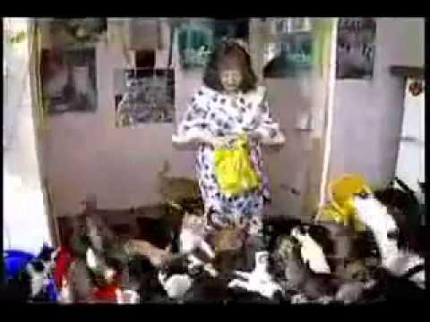 Ocd Cats Youtube