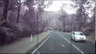 The Black Spur Wind storm Tree Fall, Victoria, Australia