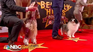 Beverly Hills Dog Show 2019: Best in Show (Full Judging) | NBC Sports