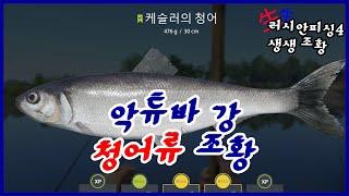 [생생조황] 200208 악튜바 청어류 조황 러시안피싱…