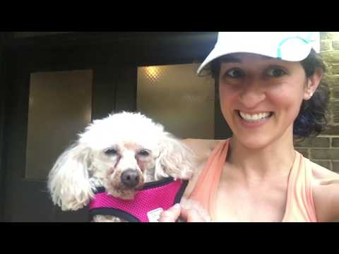 Chill walking with a Teacup Poodle named LITTLE!
