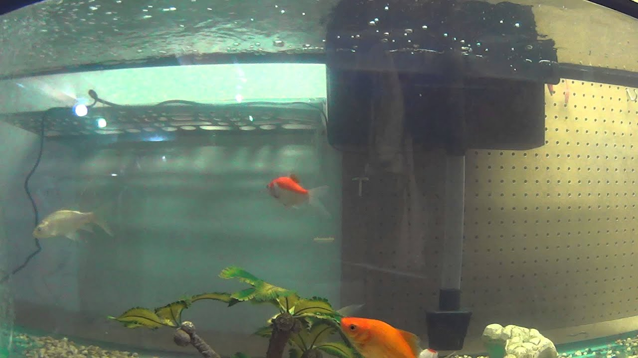 Video for your cats my goldfish and koi pond fish inside for Koi pond temperature winter
