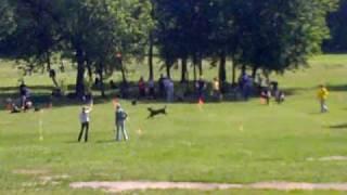 Собаки и летающие тарелки