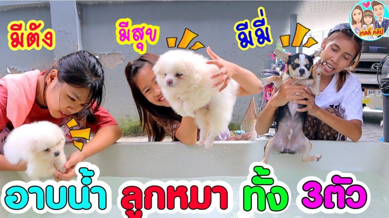 เกลลี่จับลูกหมา3ตัวอาบน้ำ มีตังกับมีสุขจะร้องมั๊ย มีมี่ข่วนแม่เกดเป็นรอยเต็มแขน
