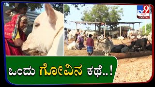 Nagamma Family In Mundaragi Of Gadag Is Sheltering Cattle For The Last 25 Years