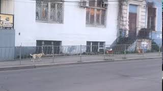 Стая собак в Симферополе 2018