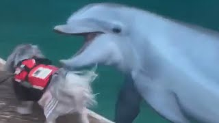 Dog Runs Alongside Dolphin And Plays With Them