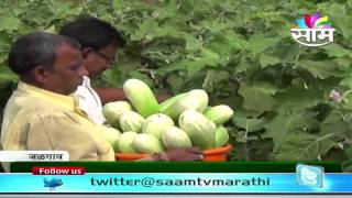 Subhash Mahajan's Bharitachi Vangi (Mashed Eggplant/Mashed Brinjal) farming success story