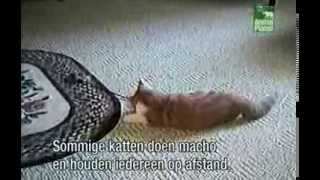 Funniest Home Videos 2 - Cats part 2 (Dutch subtitles-nederlands ondertiteld)