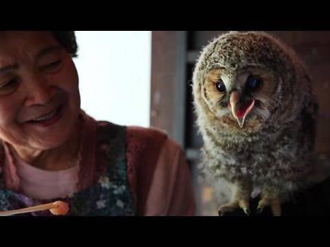 フクロウ「里親」はおばあちゃん ヒナ育て放鳥20年