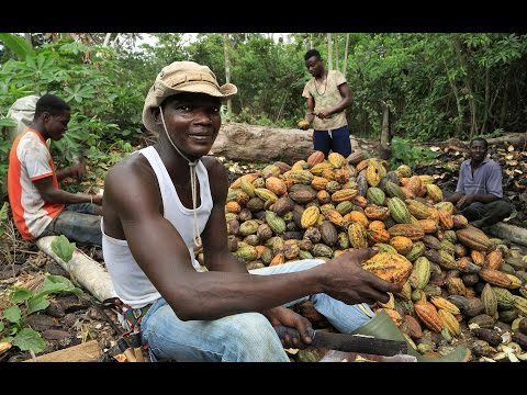 Cocoa:  a sweet value chain